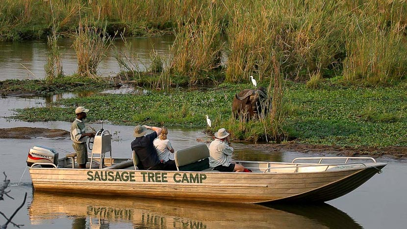 Safari en bateau sur le Zambèze, Sausage Tree, Zambie