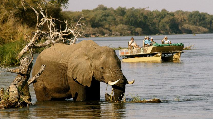 Safari en bateau sur le Zambèze, Chiawa Camp, Zambie