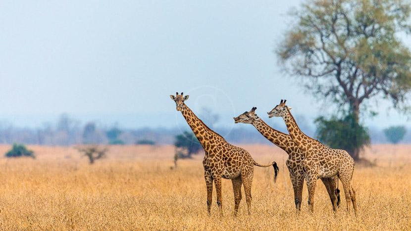 Parc national de Luambe, Luambe Camp, Zambie © Marcus Westberg