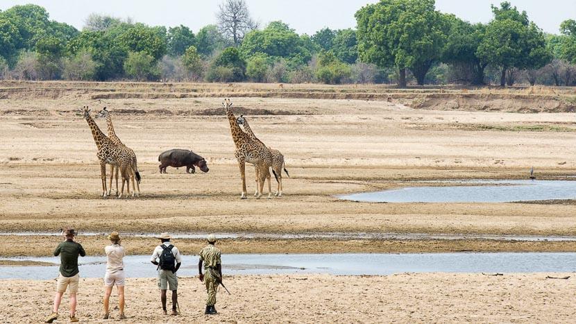 Parc national de South Luangwa, Kaingo South Luangwa, Zambie