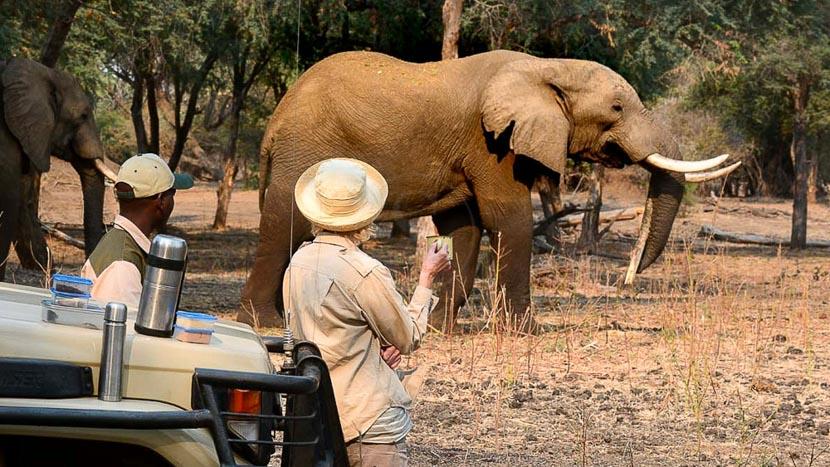 Safari en 4x4 dans le parc national de South Luangwa, Sausage Tree, Zambie