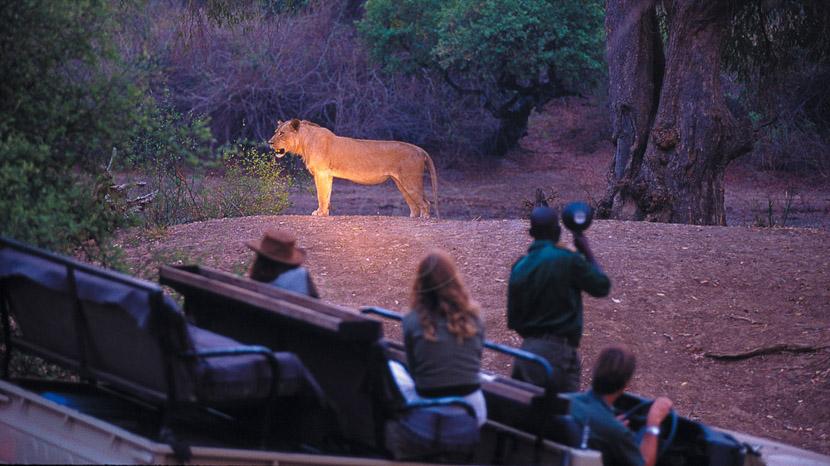 Safari nocturne en 4x4, Robin Pope Safaris, Zambie