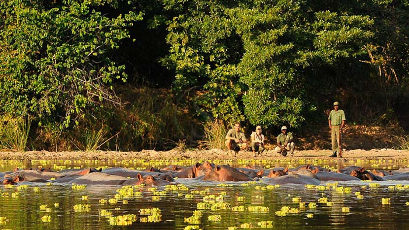 Safari à pied dans la vallée de Luangwa, Chinzombo South Luangwa, Zambie © Patrick Bentley