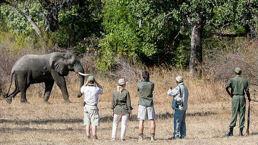 Safari à pied dans la vallée de Luangwa, Flatdogs Camp, Zambie