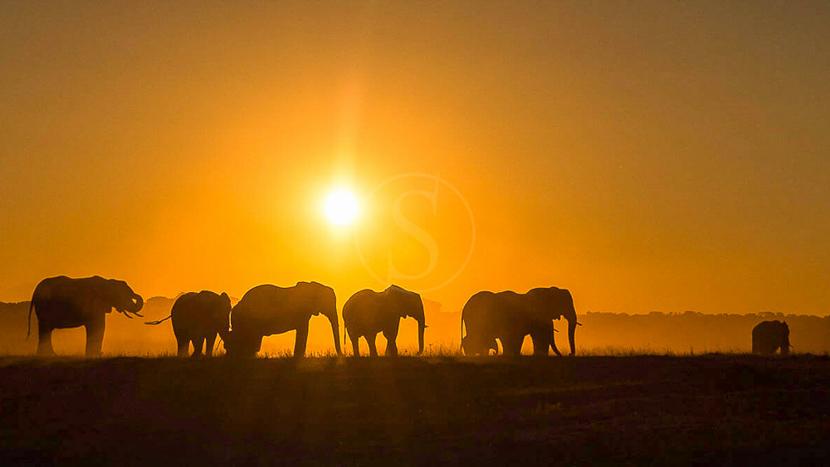 Les plus beaux couchers du soleil d'Afrique, Linkwasha Camp, Zimbabwe © Dana Allen