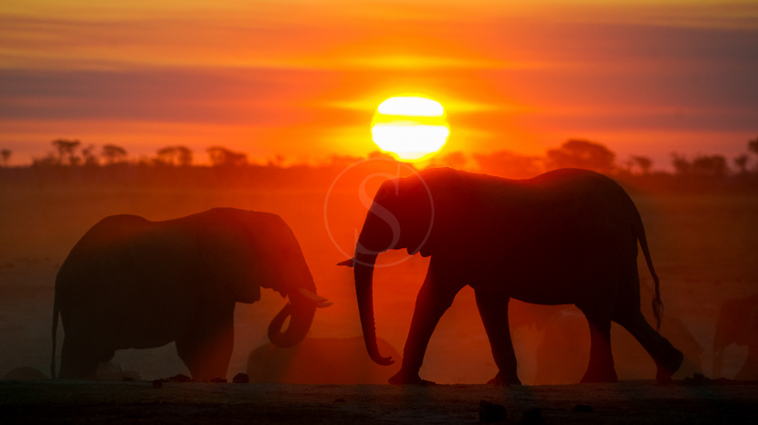Les plus beaux couchers du soleil d'Afrique, Little Makalolo, Zimbabwe © Dana Allen