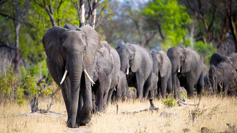 Safari en 4x4 dans le parc national Hwange, Little Makalolo, Zimbabwe © Dana Allen