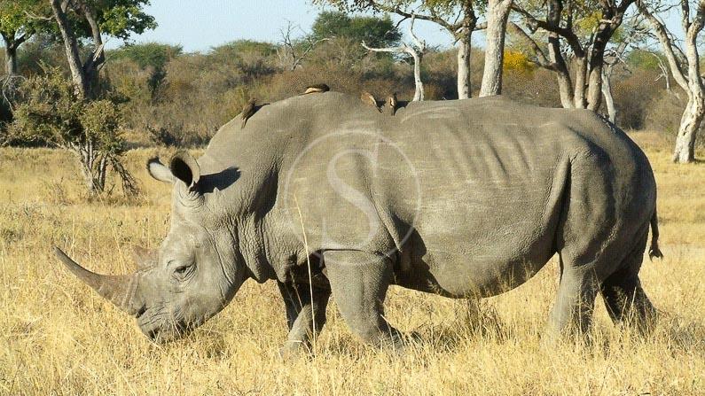 Safari en 4x4 dans le parc national Hwange, The Hide Safari Camp à Hwange, Zimbabwe