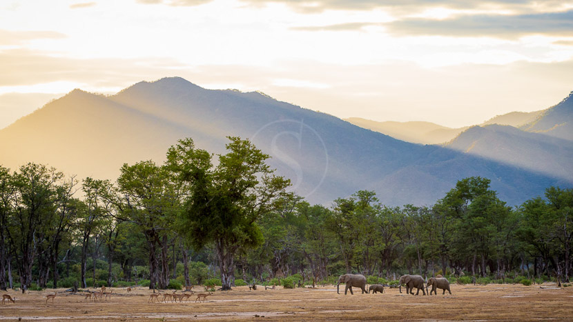 Parc national de Mana Pools, Ruckomechi Camp, Zimbabwe © Dana Allen