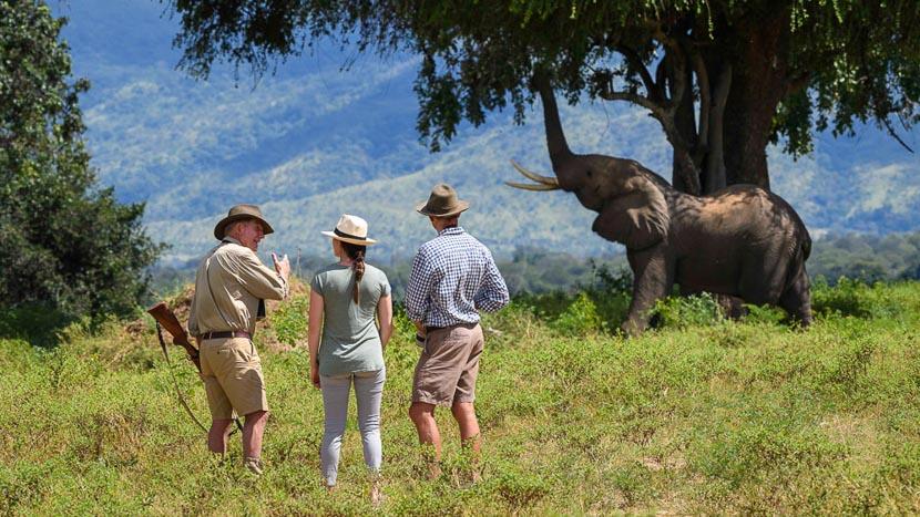 Parc national de Mana Pools, John's Camp Mana Pools, Zimbabwe © Dana Allen, Robin Pope