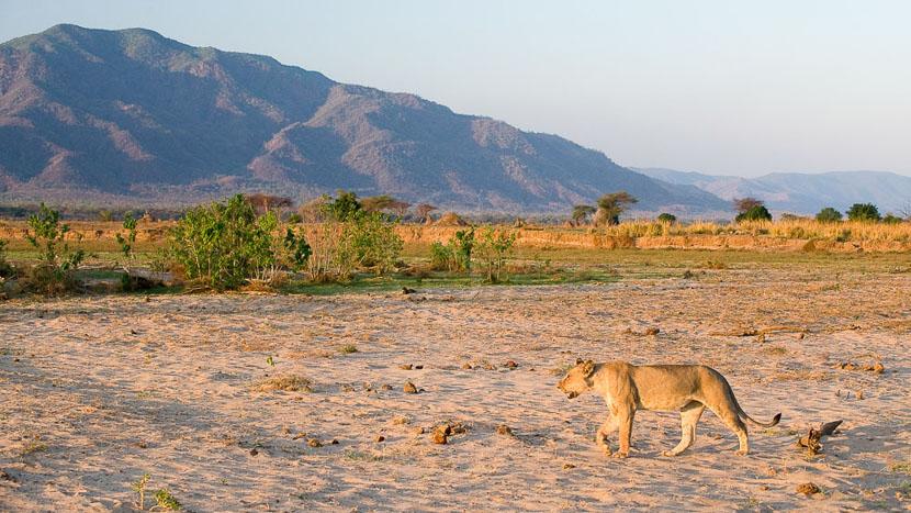 Parc national de Mana Pools, Ruckomechi Camp, Zimbabwe © Dana Allen