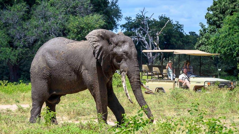 Safari en 4x4 au Zimbabwe, John's Camp Mana Pools, Zimbabwe © Dana Allen, Robin Pope
