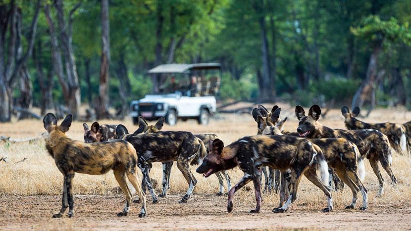 Safari en 4x4 au Zimbabwe, Ruckomechi Camp, Zimbabwe © Dana Allen