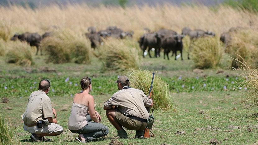 Safari à pied au Zimbabwe, Ruckomechi Camp, Zimbabwe © Dana Allen
