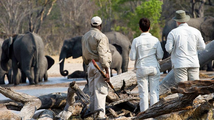 Safari à pied au Zimbabwe, Little Makalolo, Zimbabwe © Dana Allen