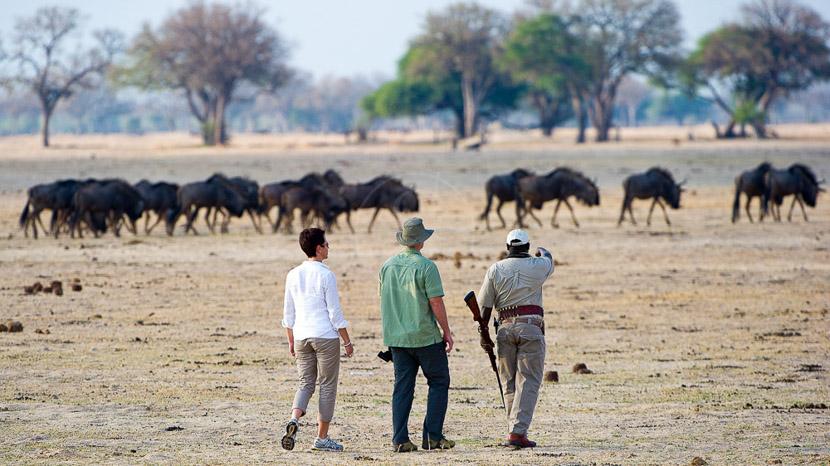 Safari à pied au Zimbabwe, Davidson's Camp, Zimbabwe © Dana Allen