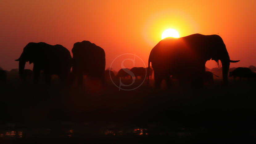 Croisière au coucher du soleil aux chutes Victoria, Activités à Victoria Falls