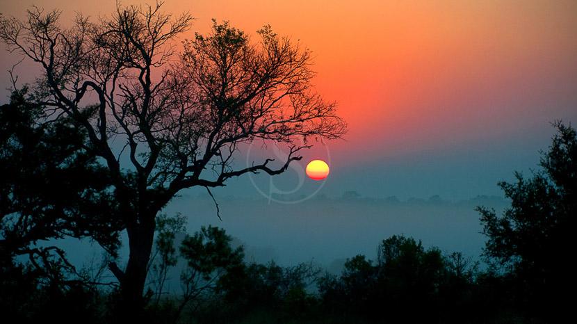 Arathusa Safari Lodge, Safari en Afrique du Sud © Alain Pons