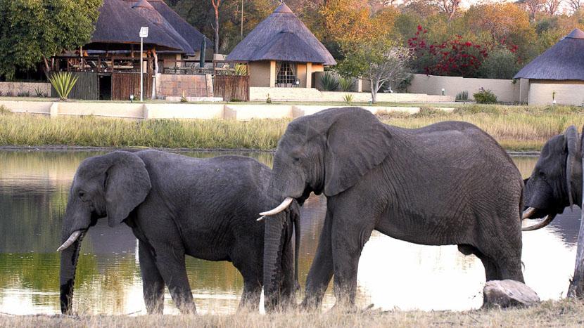 Arathusa Safari Lodge, Arathusa Safari Lodge