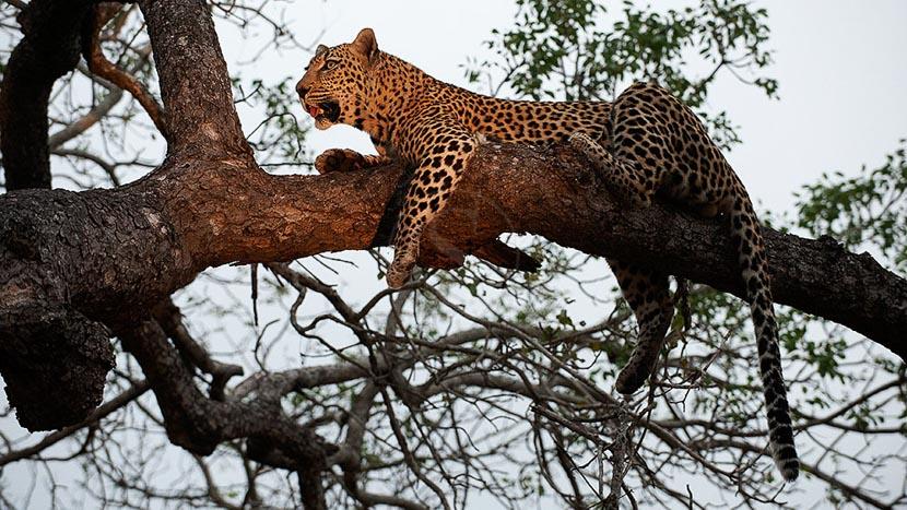 Chitwa Chitwa Game Lodge , Safari en Afrique du Sud © Alain Pons