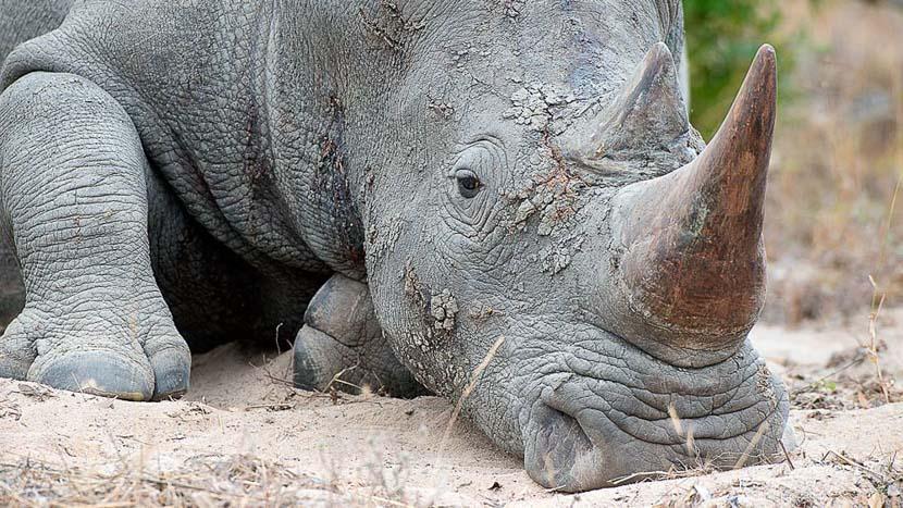 Elephant Plains Game Lodge, Safari en Afrique du Sud © Alain Pons