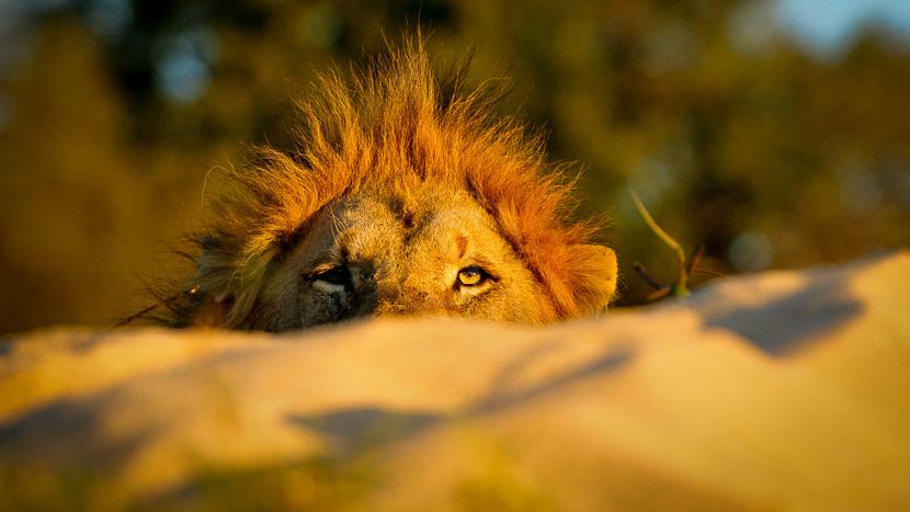 Inyati Game Lodge, Inyati Game Lodge, Afrique du Sud © Keith Jenkinson