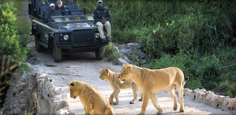 Lion Sands Tinga Lodge, Safari à Lion Sands, Afrique du Sud