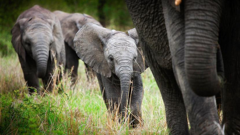 Londolozi Granite Camp, Safari à Londolozi, Afrique du Sud © Londolozi