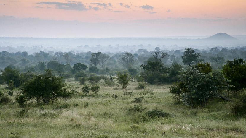 Londolozi Pioneer Camp, Safari à Londolozi, Afrique du Sud © Londolozi