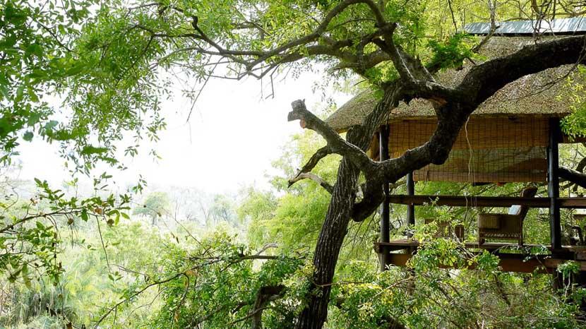 Londolozi Tree Camp, Londolozi Tree Camp, Afrique du Sud © Londolozi
