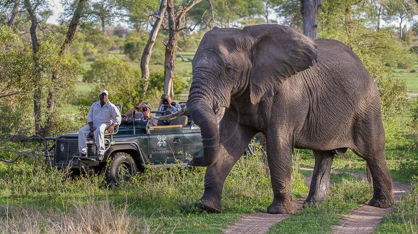 Londolozi Tree Camp, Safari à Londolozi, Afrique du Sud © Londolozi
