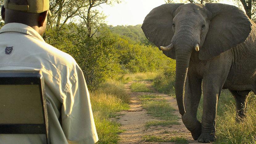 Lukimbi Safari Lodge, Lukimbi Safari Lodge, Afrique du Sud