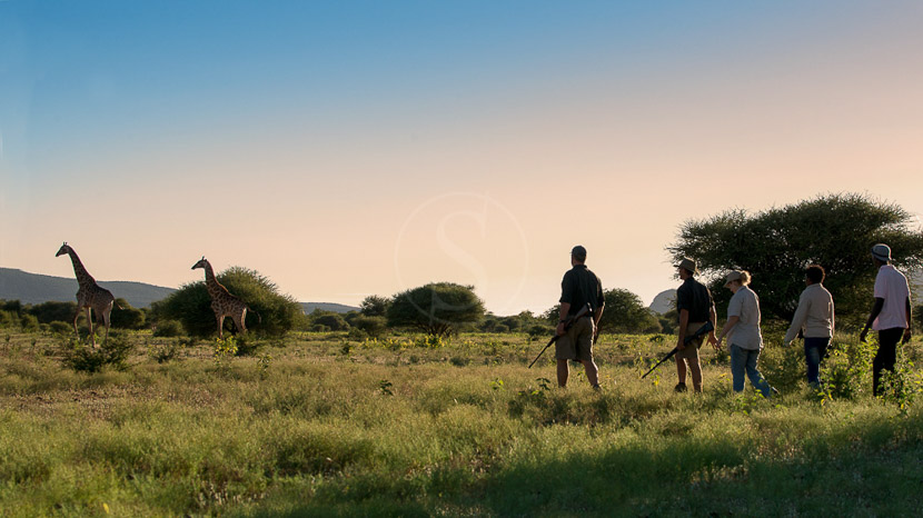 Madikwe Safari Lodge, Madikwe Safari Lodge, Afrique du Sud © More