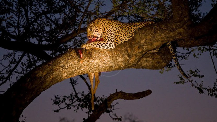 Nkorho Bush Lodge, Safari à Sabi Sand, Afrique du Sud © Christophe Courteau