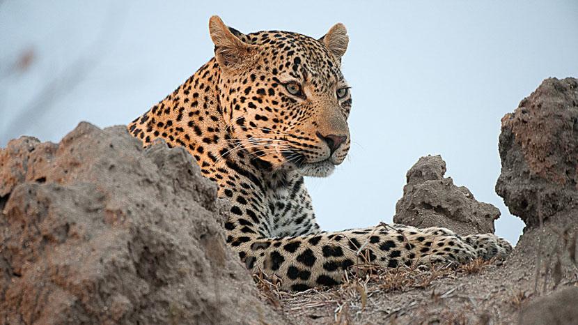 Nkorho Bush Lodge, Safari en Afrique du Sud © Alain Pons