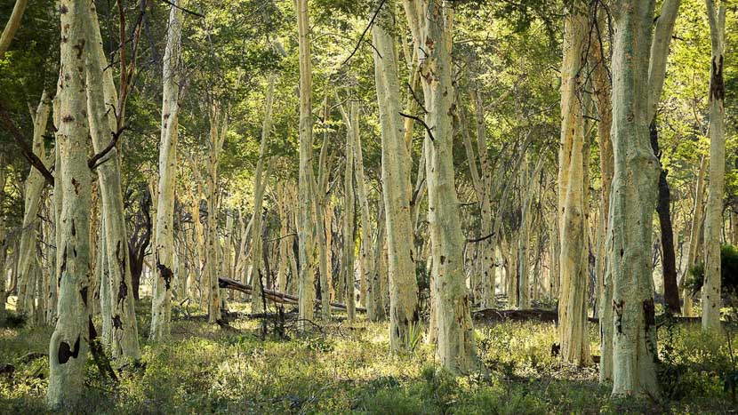 Pafuri Walking Trails, Pafuri Walking Trails, Afrique du Sud