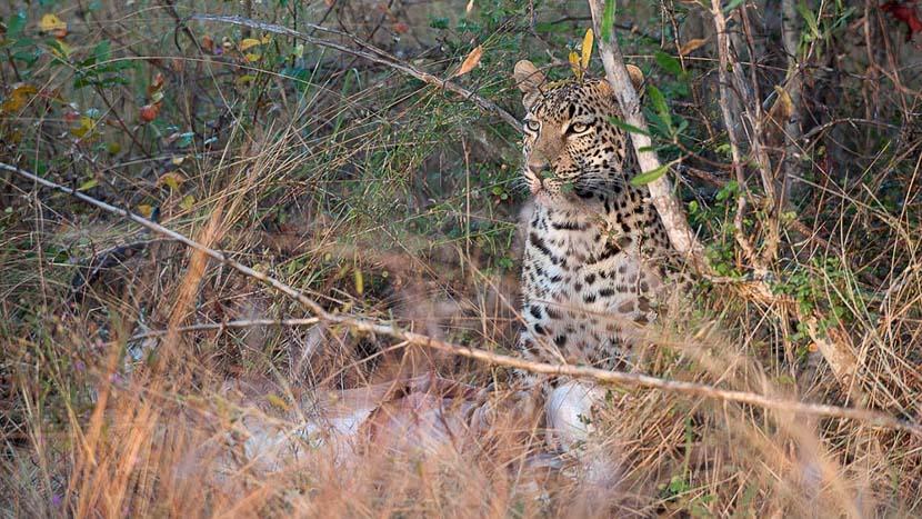 Rhino Post Plains Camp , Safari en Afrique du Sud © Alain Pons