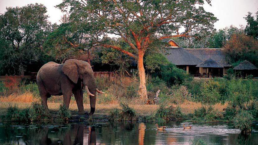 Sabi Sabi Bush Lodge, Sabi Sabi Bush Lodge, Afrique du Sud