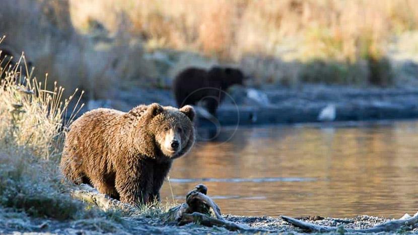 Kodiak Brown Bear Center, Kodiak Brown Bear Center, Alaska © KBBC