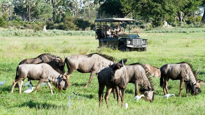 Chitabe Camp, Chitabe Camp, Botswana © Wilderness Safaris