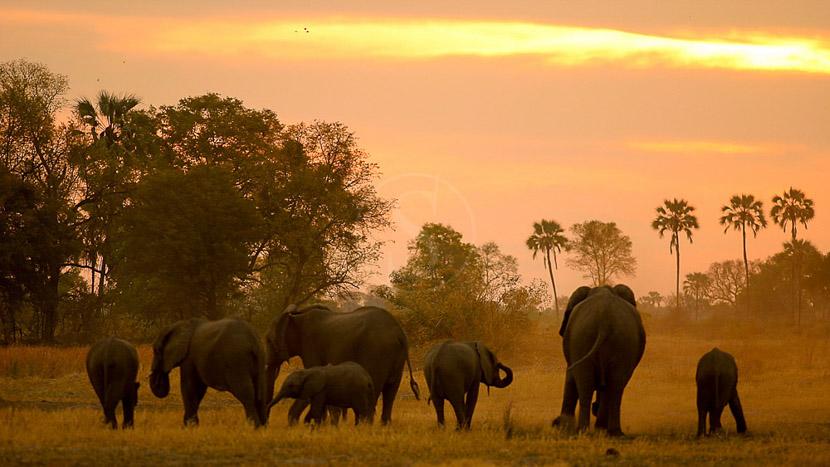 Chitabe Camp, Safari au Botswana © Wilderness Safaris