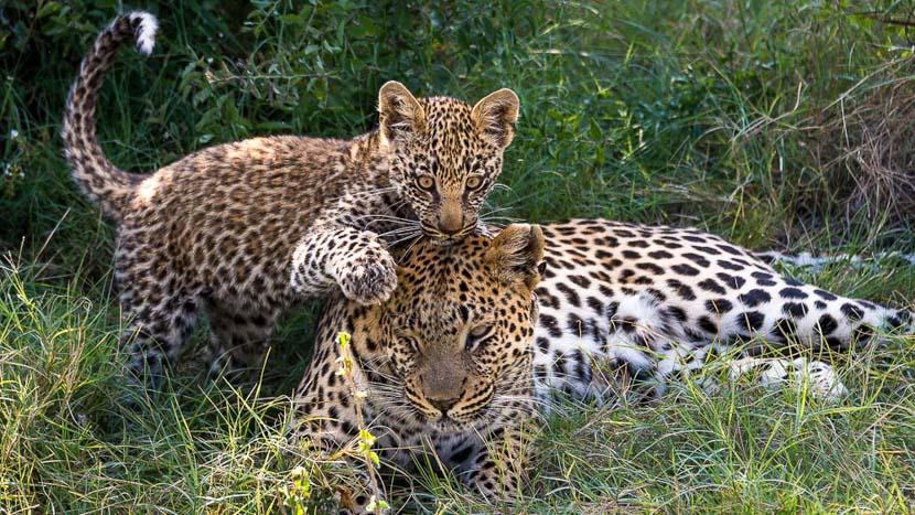 Jao Camp, Jao Camp, Delta de l' Okavango © Wilderness Safaris
