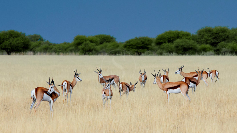 Kalahari Plains Camp, Kalahari Camp, Botswana © Caroline Culbert / Wilderness Safaris
