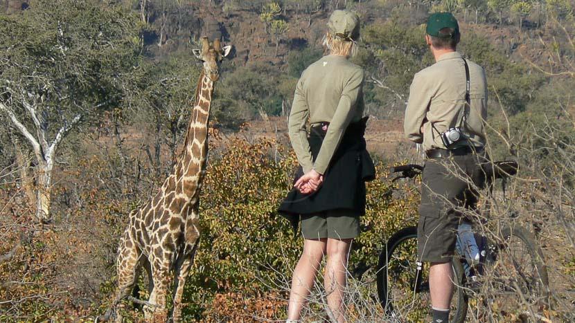 Mashatu Lodge, Mashatu Game Reserve © Olwen Evans
