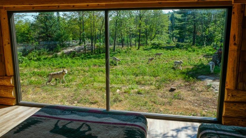 Cabane des loups au Parc Oméga, Cabane des Loups, Canada