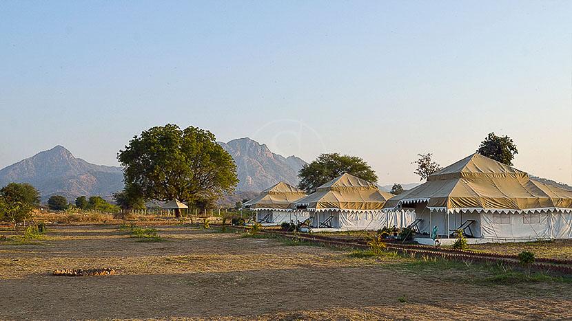 Godwad Safari Camp, Godwad Safari Camp, Inde © GSC