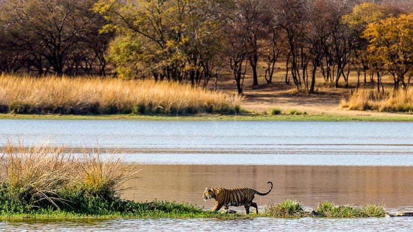 The Tree of Life Kipling Jungle Lodge, Safari à Ranthambore, Inde © Shutterstock