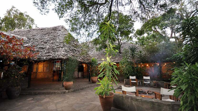 Fig Tree Camp, Fig Tree Camp, Kenya