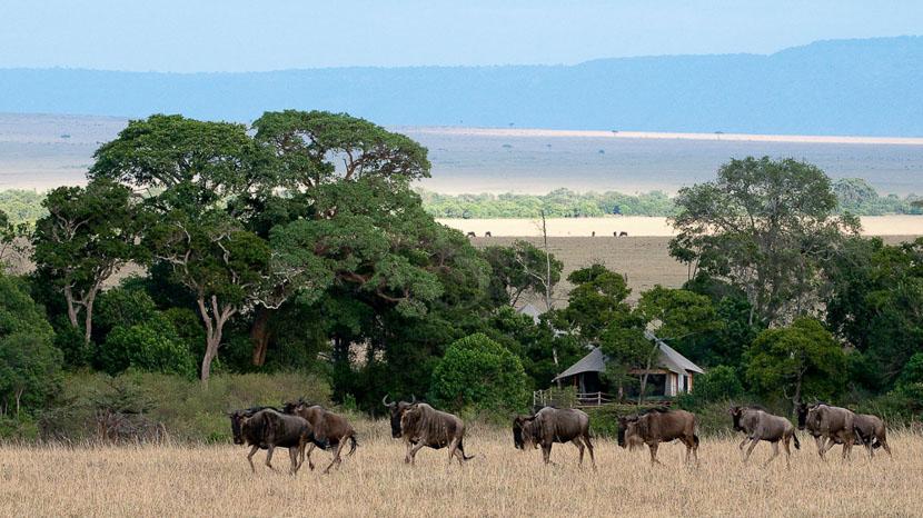 Mara Plains Camp, Mara Plains Camp, Kenya © Great Plains Conservation
