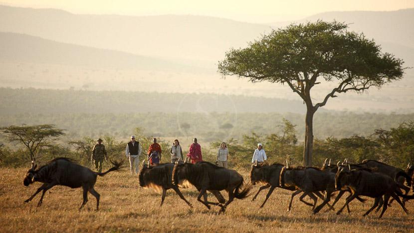 Kicheche Bush Camp, Kicheche Walking Safaris, Kenya